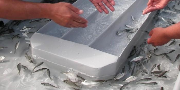 Málaga apuesta por la acuaponía y el cultivo sostenible de peces y plantas