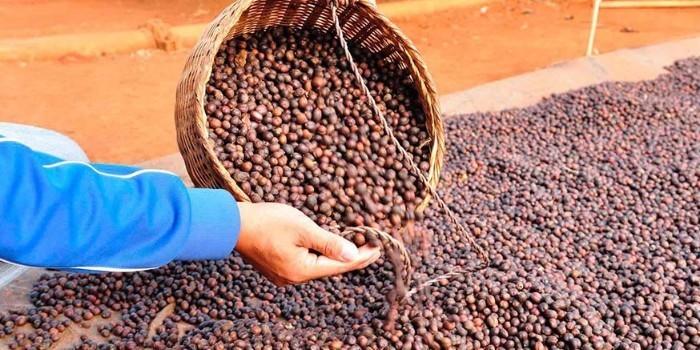 Tendencias y desafíos mundiales en la producción de alimentos