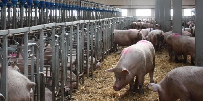 Evoluci�n de los principales �ndices t�cnicos del conjunto de explotaciones porcinas espa�olas del BDporc 2000-2015