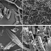 Celulosas de filtración