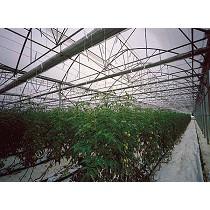 Invernaderos para horticultura