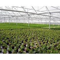 Invernaderos para floricultura