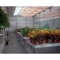 Mesas de cultivo para invernaderos