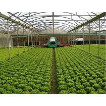 Recolectoras de hortalizas
