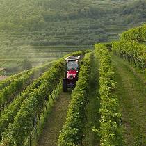 Tractores compactos y especialistas