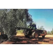 Buggy para recolección de aceitunas y frutos secos