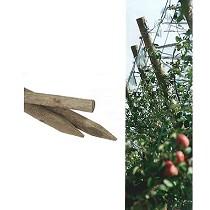 Estacas y postes de pino