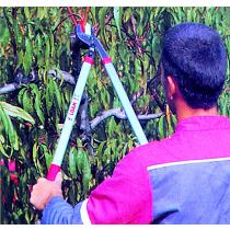 Tijera cortadora de ramas