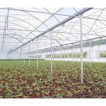 Invernadero multicapilla de producción
