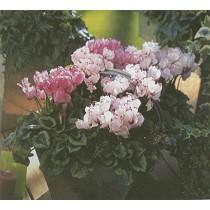 Plantas para otoño/invierno