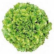 Semillas de ensalada