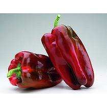 Semillas de pimiento lamuyo rojo