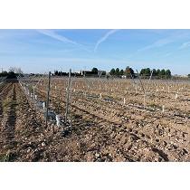 Postes para olivos y árboles frutales