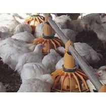Equipos para el bienestar avícola