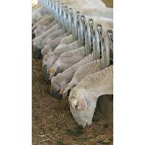 Equipos para el bienestar ovino