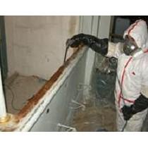 Tratamientos contra las termitas