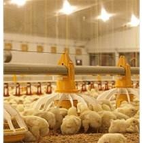 Comederos avícolas