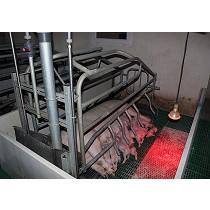 Rejillas para suelos de granjas porcinas