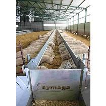 Cintas de alimentación para ovino