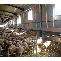 Comederos para ganado ovino