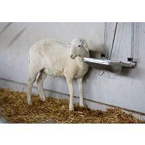 Bebederos para ganado ovino
