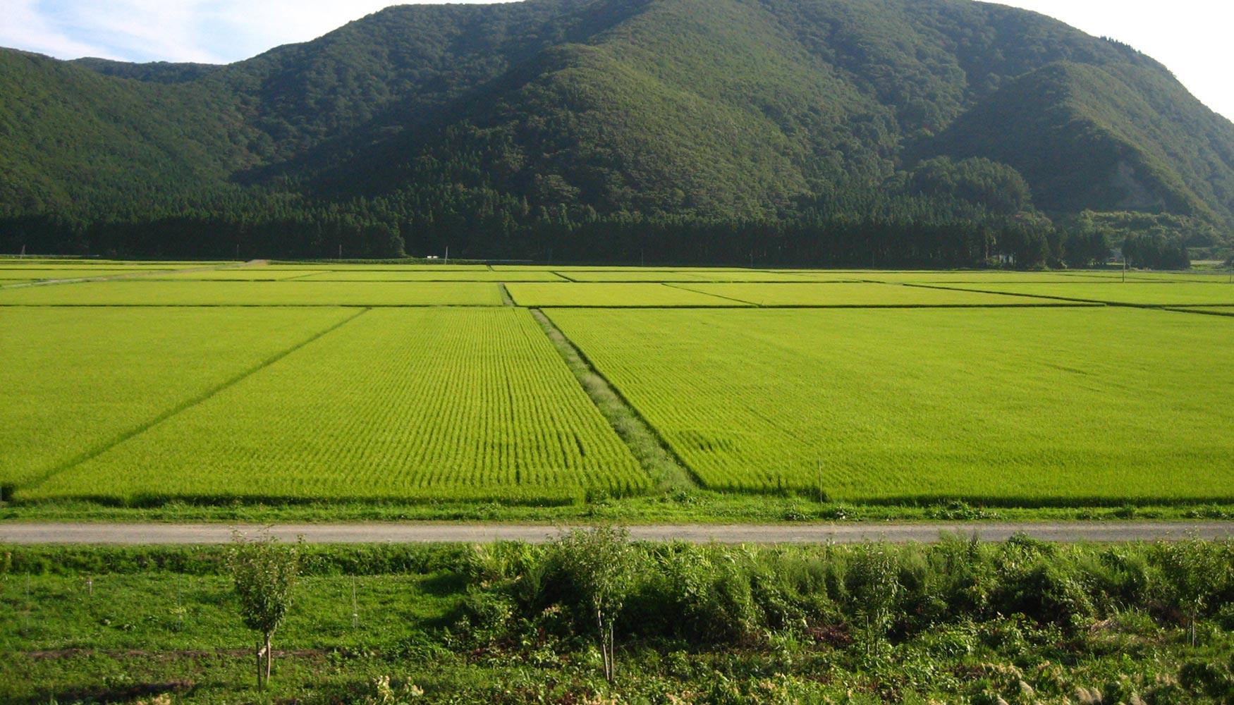 Investigadores estudian el uso m s sostenible del agua en for Mesas de cultivo grandes