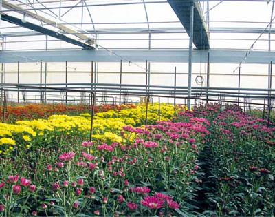 Los cultivos ornamentales en el mediterr neo espa ol for Importancia de las plantas ornamentales
