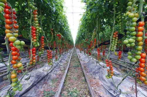 Los sistemas de riego en invernaderos Industria del agua