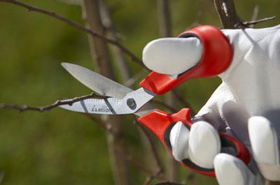 Bellota inicia su campa a jard n 2011 horticultura for Bioshock jardin de las recolectoras