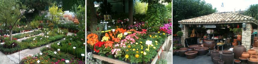 Jardineria en casa amazing tenis plantas en casa os for Jardineria en casa