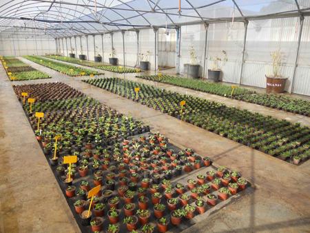 jardines y paisajes sostenibles y eficaces pl stico