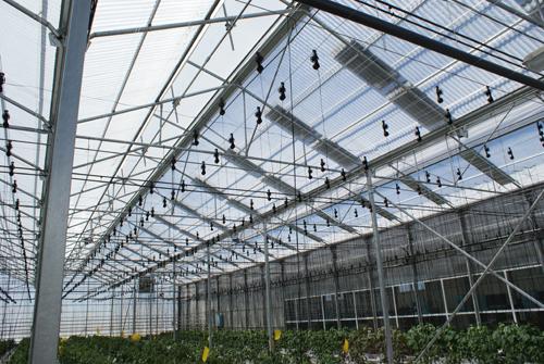 Un Nuevo Cultivo Para El Invernadero La Energ 237 A El 233 Ctrica