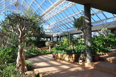 Kirstenbosch jard n bot nico nacional jardiner a for Jardin kirstenbosch