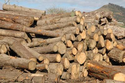 La evoluci n de la oferta espa ola de materia prima para for La beta de la madera