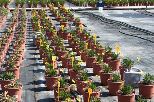 Uso de sustratos aut ctonos en viveros de planta for Viveros ornamentales