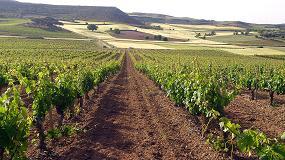 Foto de Bodegas Torres compra vi�as en Ribera del Duero para elaborar un vino icono
