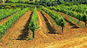 Foto de La diversidad gen�tica de la vid y los retos de la viticultura