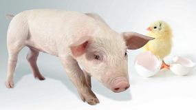 Foto de Investigan nuevas estrategias para optimizar la eficiencia alimentaria en monogástricos