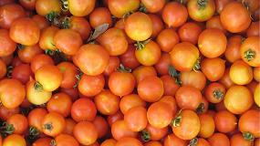 Foto de Jornada: 'riesgo y fertilización en cultivo ecológico de tomate de colgar'