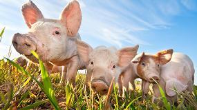 Foto de Lecciones aprendidas utilizando Virus Atenuados de la Peste Porcina Africana