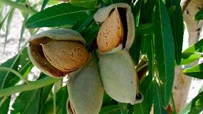 Foto de El IRTA presenta sus variedades de almendro de floración tardía en Fruit Logistica