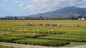 Foto de XII Jornada técnica del arroz en Deltebre