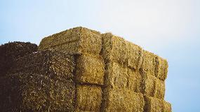 Foto de El acolchado de paja reduce la erosi�n de suelos