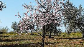 Foto de La VI Jornada de Fruticultura estará dedicada al almendro