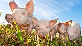 Foto de Acción a nivel europeo para mejorar la industria porcina