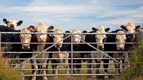 Foto de Dehesa Grande, nuevo operador del Mercado de Origen Nacional de Vacuno de Carne