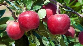 Foto de El IRTA Mas Badia reduce el gasto de agua en el cultivo de manzana de Girona