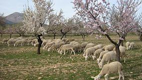 Fotografia de Primer concurso sobre sostenibilidad, calidad, tradición y origen de la carne de cordero