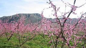 Foto de III Jornada de estudios Fruit.Net sobre manzana, pera, melocotón y cítricos