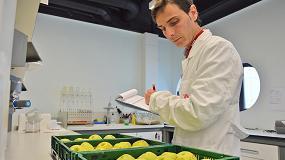 Foto de El IRTA desarrolla dos nuevos métodos para predecir el bitter pit en manzana